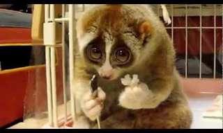 5 חיות חמודות במיוחד שמעולם לא הכרתם