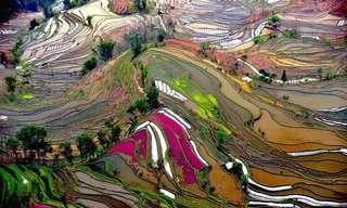 צילומים יוצאי דופן של שדות מרחבי העולם