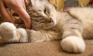 מחקר קובע: חתולים אוהבים אתכם כמו כלבים ותינוקות