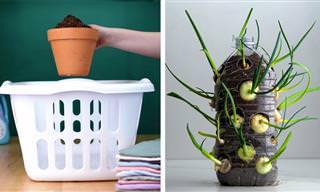 סרטון טיפים נהדרים לגינון וגידול צמחים בבית