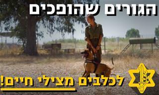 הכירו את גורי הכלבים הישראלים החמודים שיגדלו להציל חיים!