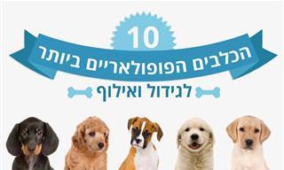 מידע על 10 הכלבים הפופולאריים ביותר לגידול ואילוף
