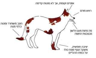 המדריך לפענוח שפת הגוף של כלבים