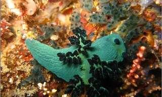 חלזונות הים - תמונות מדהימות!