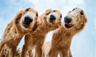 18 תמונות נבחרות מתחרות צילום הכלבים של Kennel Club לשנת 2019