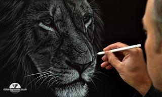 ציורים מרגשים במיוחד של חיות בר מרחבי העולם