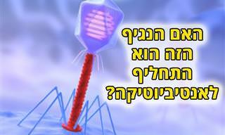 במחקר חדש נמצא: נגיפים קוטלי חיידקים עשויים להחליף את האנטיביוטיקה