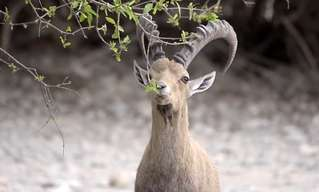 שמירה על חיות הבר בישראל
