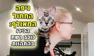 הכירו את ניפה - החתול התעלולן שמשגע את הרשת!