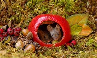 19 תמונות של חיי עכברים בכפר מיניאטורי