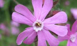 10 הפרחים הנדירים ביותר בעולם!