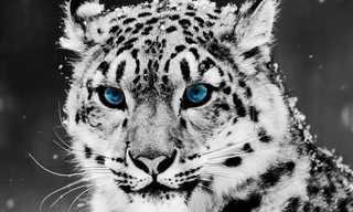 25 טפטים מדהימים של בעלי חיים!