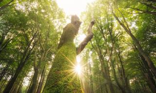 17 תמונות מרהיבות של יערות ברחבי הולנד