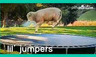 חיות קופצניות: סרטון מקסים וחמוד במיוחד!