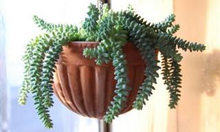 10 צמחים ביתיים מיוחדים שדורשים מעט השקיה ותחזוקה