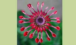 פרחים מדהימים!