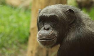 עיזרו לקוף לצלוף - משחק בלונים ממכר!