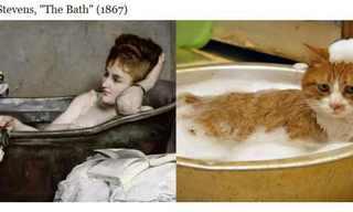 חתולים עושים אמנות - אוסף תמונות משעשע!