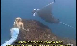 האם יש דבר כזה בתולות ים?
