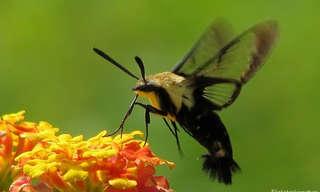 7 עשים שגורמים לפרפרים להיות משעממים!