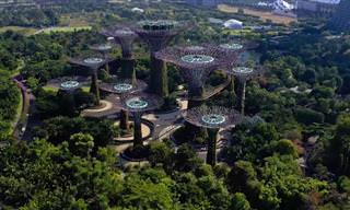 סיור מרהיב בגנים שליד המפרץ בסינגפור