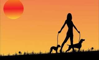 כלב לברדר הצליח לזהות סרטן המעי