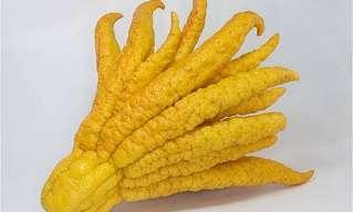 ידו של בודהה - הפרי הכי מוזר בעולם!