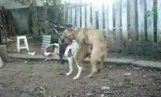 הצפיה מגיל 18 ומעלה - הכלבים האלו כנראה היו כלואים הרבה זמן לבד
