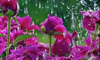 פרחים בגשם - מצגת נפלאה!