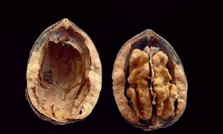 סגולותיהם הרפואיות של אגוזי מלך