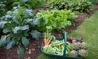 מדריך לשתילה וגידול מגוון ירקות