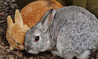החיות החמודות האלו מביעות אהבה בדרך הכי יפה שיש!