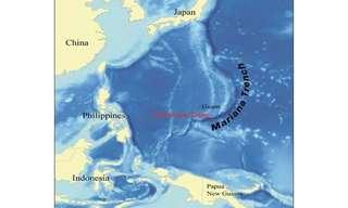 היצורים שחיים במקום הכי עמוק באוקיינוס