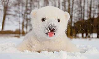 חיות שמשחקות שלג בפעם הראשונה