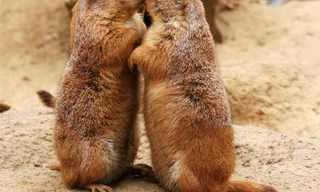 חיות מתנשקות - אוסף תמונות מקסים!