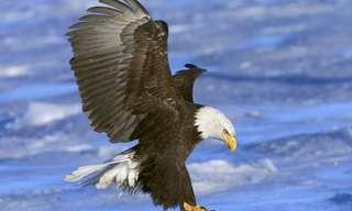 תמונות נפלאות של בעלי הכנף