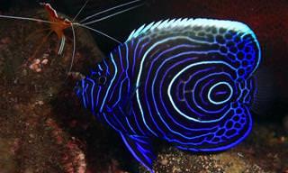 חגיגה תת ימית של צבע ויופי: צפו ב-18 מהדגים היפים בעולם
