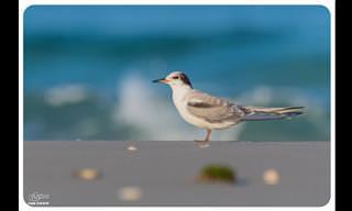 צפו בעופות המים המדהימים והיפהפיים שמגיעים לארצנו הקטנה...