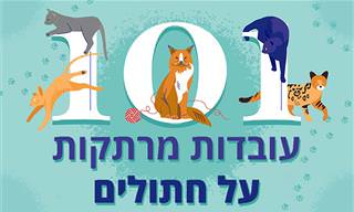 101 עובדות מרתקות על חתולים