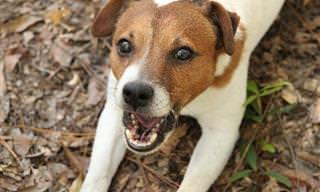 8 צלילים ורעשים שהכלב שלכם עושה והמשמעות שלהם