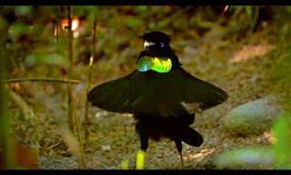 10 סרטוני טבע מדהימים של רשת BBC