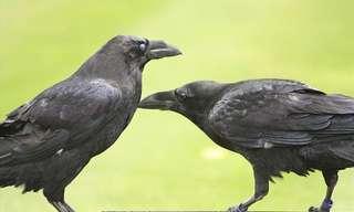 סיפור אמיתי ומצחיק: עצור! שמור מרחק! אוכלי נבלות!