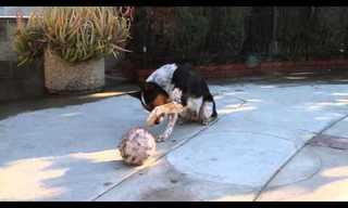 זה כנראה הכלב הממושמע ביותר בעולם!