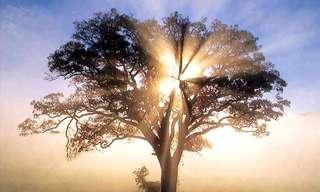 איך מזהים פוטנציאל להתעוררות רוחנית?