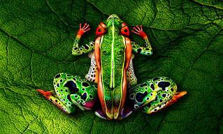 ציורי גוף מדהימים של עולם החי
