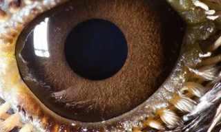 צילומי תקריב של עיני בעלי חיים - מדהים!