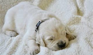מה משמעות תנוחת השינה של חיית המחמד שלכם