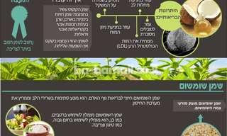 היתרונות הבריאותיים של השמנים הצמחיים!