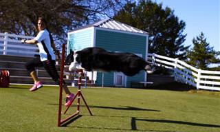 סרטון מדהים של אתגר הכלבים הגדול