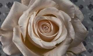 צמיחת פרחים מדהימה באיכות HD מתקדמת